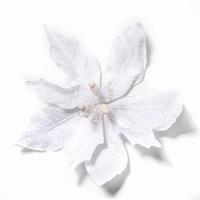 Fleur Noel Pontsettia blanc Per omdoos
